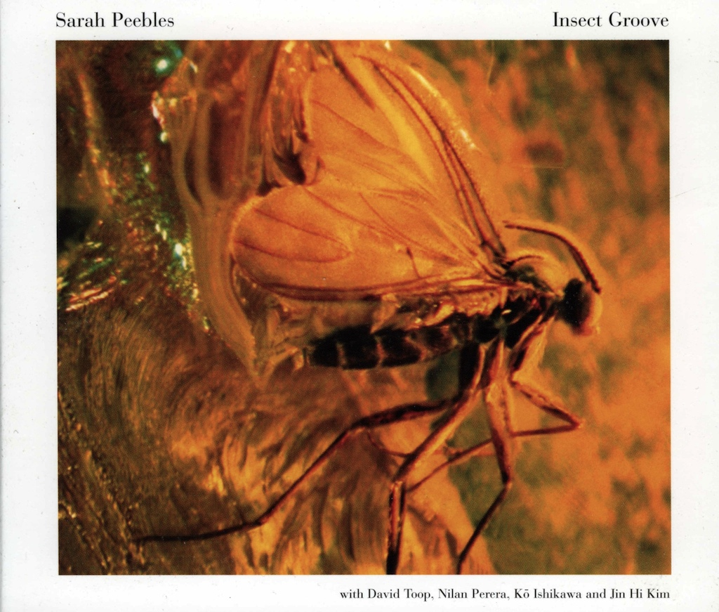 Insect Groove - Front cover